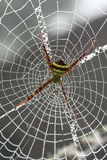 Grande araignée Images libres de droits