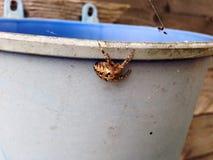 Grande araignée Image libre de droits
