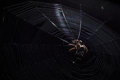 Grande araignée de jardin brune au centre de son Web avec la petite proie d'insecte la nuit Photo stock