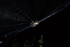 Grande araignée de jardin brune au centre de son Web avec la petite proie d'insecte la nuit Photographie stock