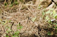 A grande aranha com pés longos senta-se em sua Web imagem de stock