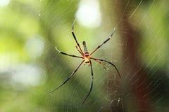 Grande aranha na Web fotos de stock