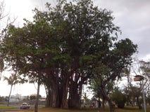 Grande arbre Immagini Stock Libere da Diritti