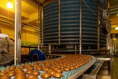 Grande automatizado alrededor de la máquina del transportador en cadena de producción de la fábrica, de las galletas y de las tor fotografía de archivo libre de regalías