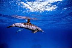 Grande azzurro Fotografia Stock