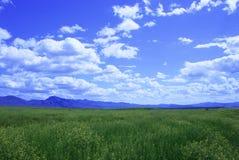 Grande bacia pastoral Foto de Stock