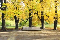 Grande banco bianco sotto gli alberi alti in autunno Immagini Stock Libere da Diritti
