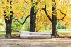 Grande banco bianco sotto gli alberi alti in autunno Fotografie Stock Libere da Diritti