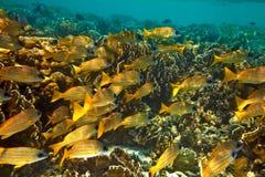 Grande banco dei pesci fotografia stock libera da diritti