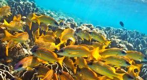Grande banco dei pesci fotografia stock