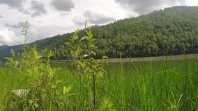 Grande, bello fiume siberiano archivi video