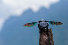 Grande besouro com asas do arco-íris Imagem de Stock Royalty Free