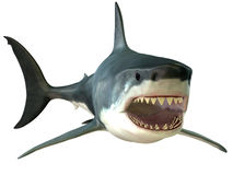 Grande boca do tubarão branco fotos de stock royalty free