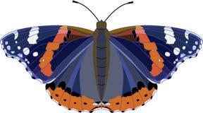 Grande borboleta preta e azul com os pontos alaranjados e brancos Atalanta do vanessa da borboleta do almirante vermelho Ilustraç ilustração do vetor