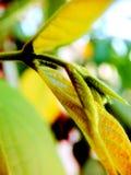 Grande botão e ramo recém-nascido do botão de uma planta imagem de stock