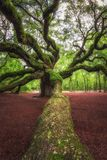 Grande branche menant vers Angel Oak Tree en Caroline du Sud image stock