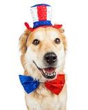 Grande cão do Dia da Independência feliz Imagem de Stock