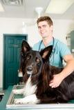 Grande cão na clínica pequena de Animcal imagens de stock