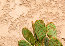 Grande cacto afiado verde que contrasta à parede golpeada dourada foto de stock royalty free