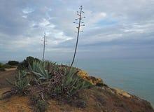Grande cactus sulla riva di mare dell'arenaria con un cielo blu Fotografie Stock Libere da Diritti