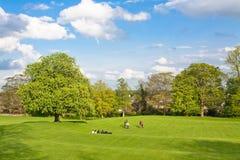 Grande campo con gli alberi Fotografia Stock Libera da Diritti