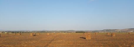 Grande campo de Straw Cubes Lying In The após a colheita que cria por muito tempo foto de stock