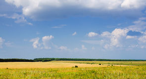 Grande campo di erba selvatica sugli ambiti di provenienza del cielo Immagini Stock