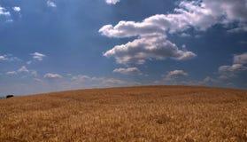 Grande campo di frumento fotografia stock