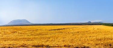 Grande campo dopo il raccolto Fotografia Stock Libera da Diritti