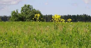 Grande campo verde com árvores e vegetação video estoque