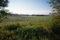 Grande campo verde degli agricoltori nella campagna Fotografie Stock Libere da Diritti