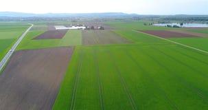 Grande campo verde, sorvolando il campo, piante crescenti, agricoltura, grande campo verde sui precedenti di un piccolo archivi video
