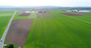 Grande campo verde, sorvolando il campo, piante crescenti, agricoltura, grande campo verde sui precedenti di un piccolo video d archivio