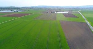 Grande campo verde, sorvolando il campo, piante crescenti, agricoltura, grande campo verde sui precedenti di un piccolo stock footage