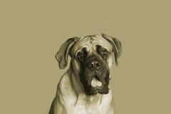 Grande cane Immagini Stock