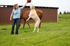 Grande cane che salta per la palla immagine stock