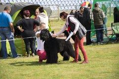 Grande cane nero dell'esposizione canina Fotografia Stock Libera da Diritti