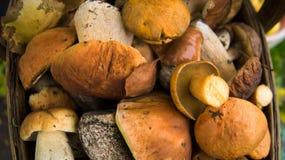 Grande canestro dei funghi Priorità bassa di autunno immagini stock