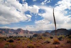 Grande canyon 26 fotografia stock libera da diritti