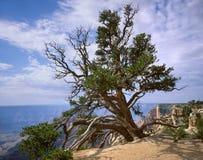 Grande canyon, albero immagini stock libere da diritti