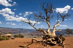 Grande canyon; Cedro Ridge Immagini Stock Libere da Diritti