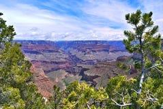 Grande canyon ed alberi Immagini Stock