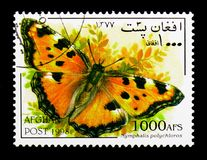 Grande carapace (polychloros) del Nymphalis, serie delle farfalle, Fotografia Stock Libera da Diritti