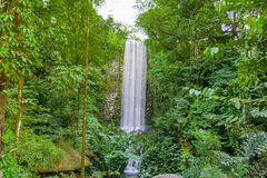Grande cascata verticale nella foresta pluviale Fotografia Stock Libera da Diritti
