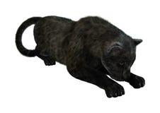 Grande Cat Black Panther Immagine Stock Libera da Diritti