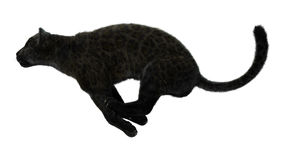 Grande Cat Black Panther Fotografia Stock Libera da Diritti
