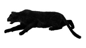 Grande Cat Black Panther Fotografia Stock