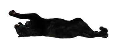Grande Cat Black Panther Fotografie Stock