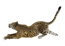 Grande Cat Jaguar su bianco Fotografia Stock Libera da Diritti