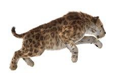 Grande Cat Sabertooth Photos libres de droits